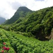 Madeira foresta
